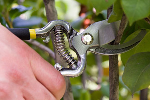 Best Tree Trimming Tools In 2015 Review