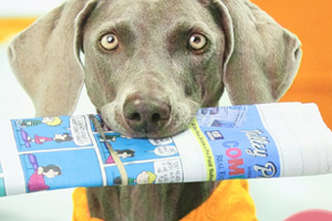 Top 10 Best Dog Training Books Reviews in 2015